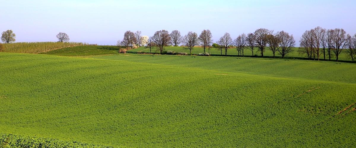 Collegio dei Periti Agrari e dei Periti Agrari Laureati della Provincia di Potenza